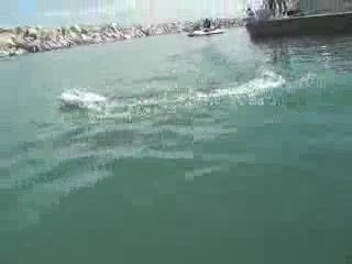Toy RC Boat running in the harbor from:DotComd